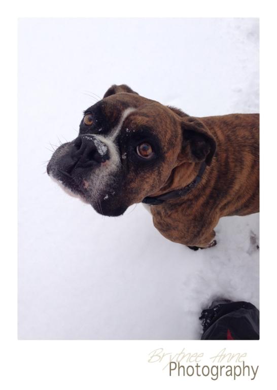 brytneeannephotography.com | Winter Puppyland